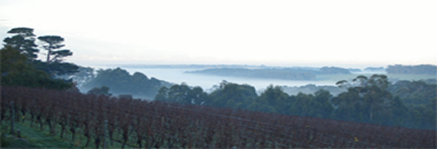 vineyard view in fog